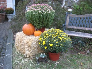mums, pumpkins and hay bale