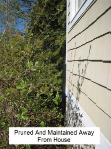 prune plant away from house
